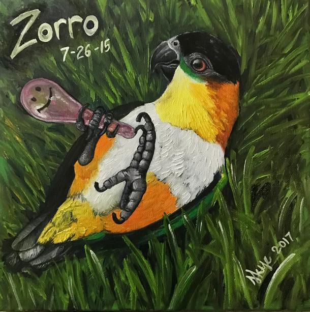 """""""Zorro"""""""