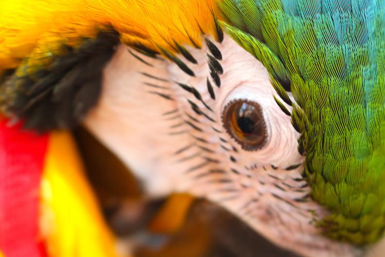 Close up of George