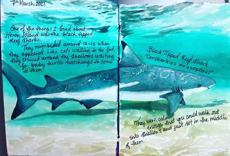 Journal page - Heron Island