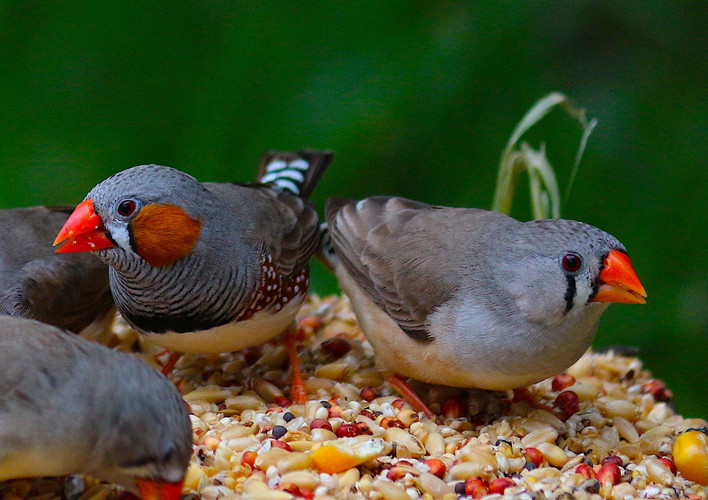 Close up of finches