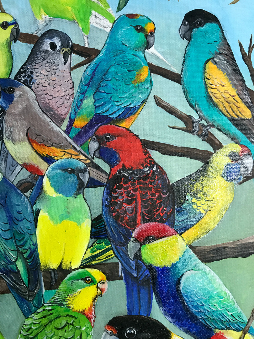 "Close up of ""Parakeets of Australia"""