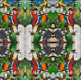 Exotic Parrots Tiled
