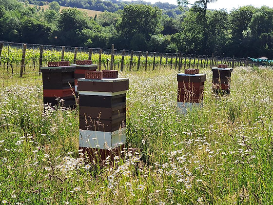 One Day Beekeeping Course