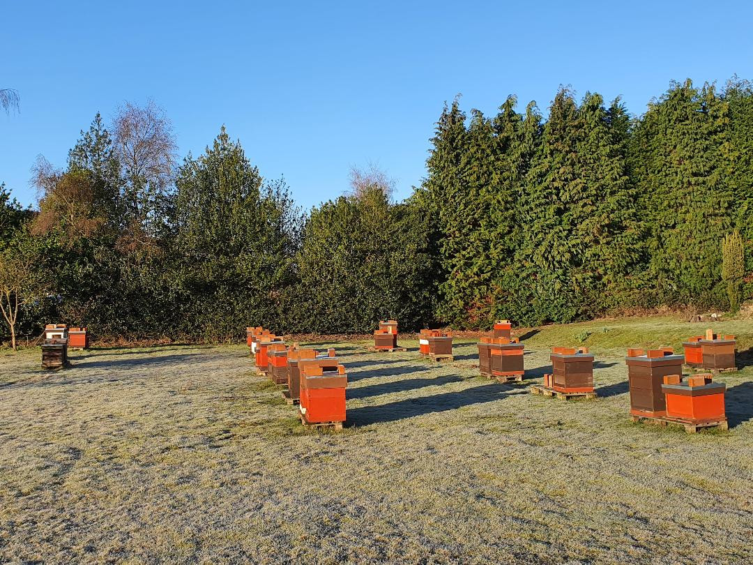 Apiary on a frosty morning - 26 Feb 2021