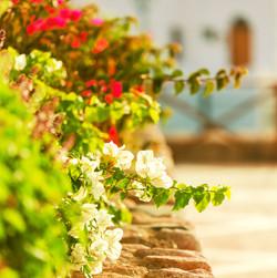 bigstock-in-garden-62343977