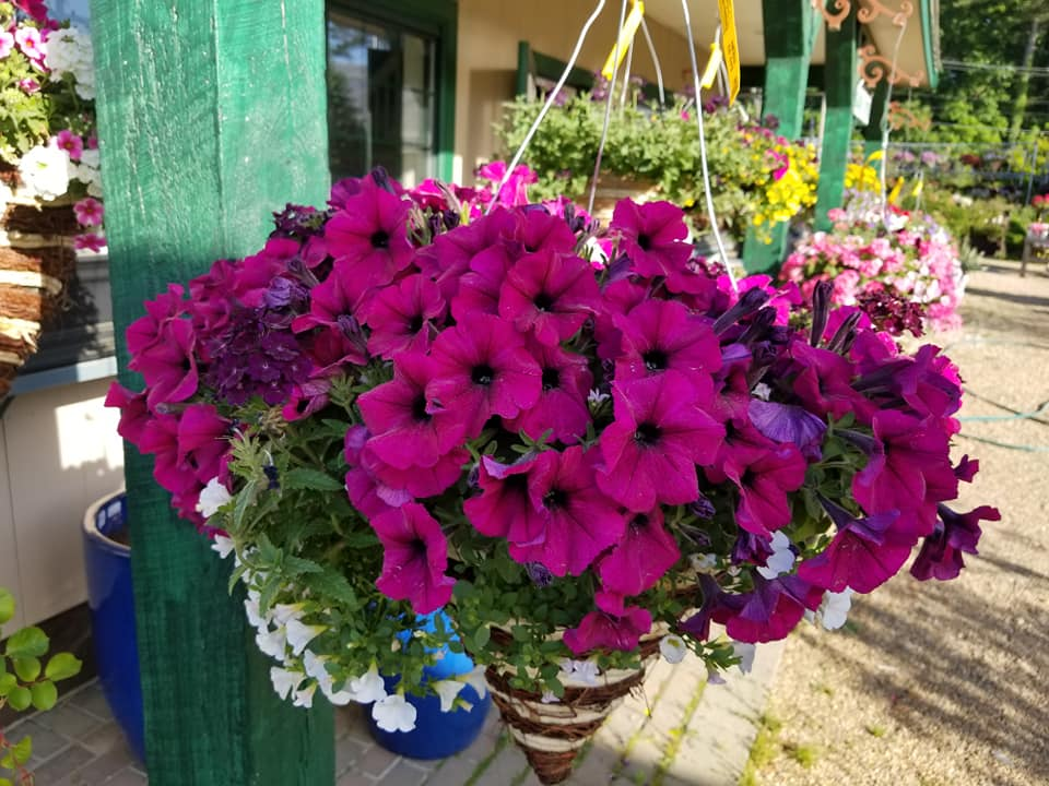 Hanging Basket 3