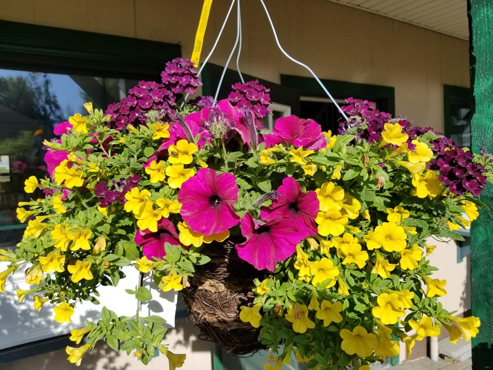 Hanging Basket 4