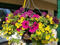 Hanging Basket 4