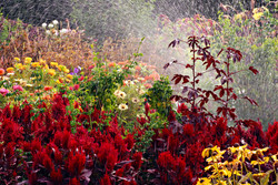 bigstock-Late-summer-flower-garden-with-15025751