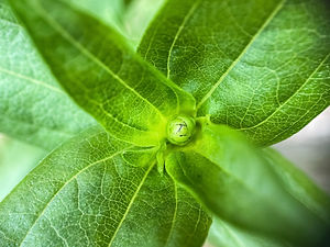 green-leaf-plant-in-close-up-photography