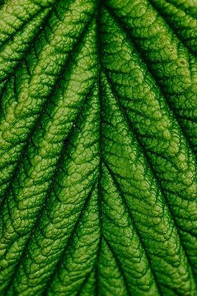 macro-photography-of-a-leaf-4608928.jpg