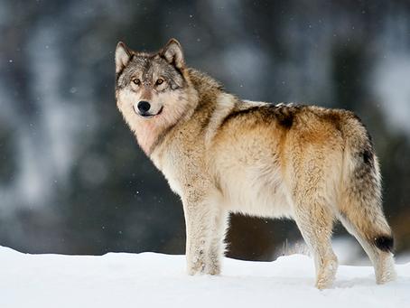 Super Blood Wolf Moon January 2019!