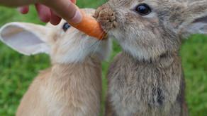 My Latest Hare-Brained Scheme