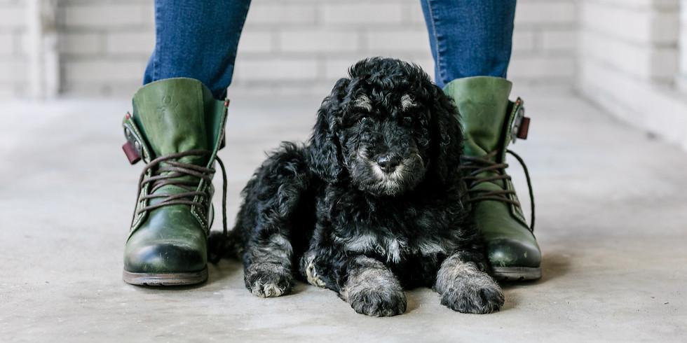 Kensie's Charlotte Puppy Pickup (1)