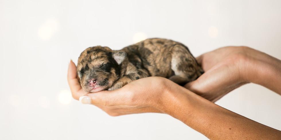 Fendi's Charleston Puppy Pickup
