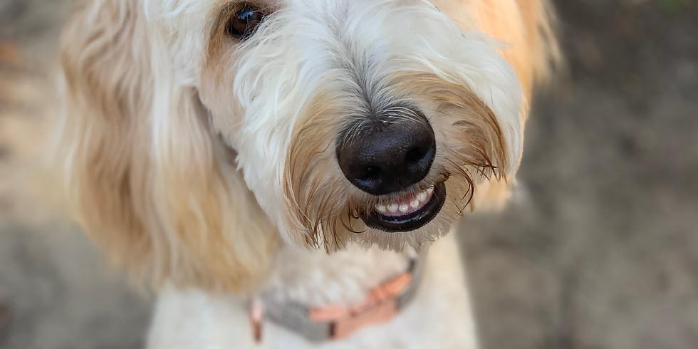 Betsey's Charleston Puppy Pickup