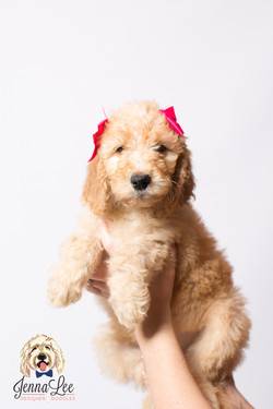 Pink Collar Female