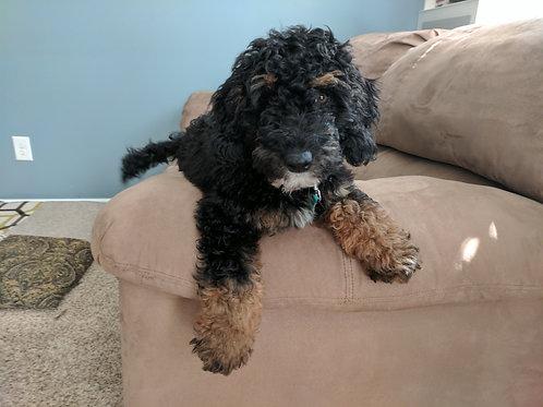 Vera's 2018 Puppies