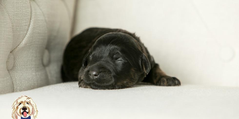 Mischka's Charleston Puppy Pickup