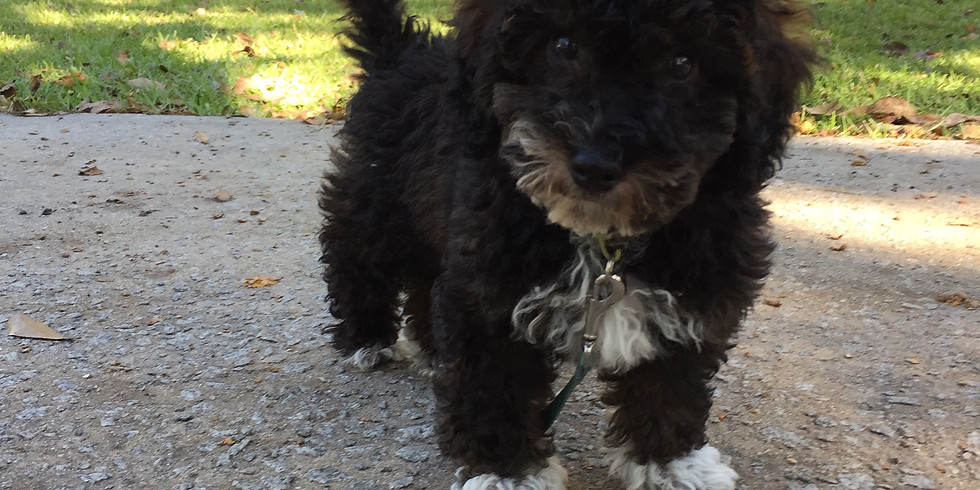 Lilly's Charleston Puppy Pickup