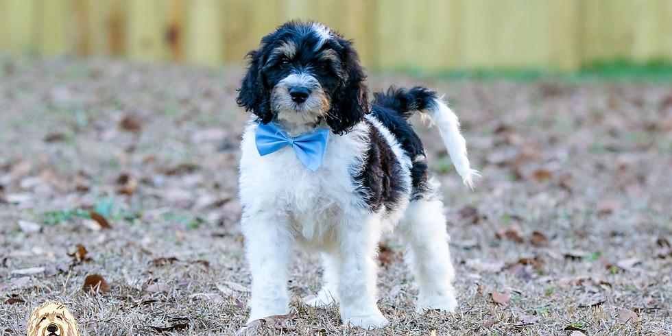 Prada's Charlotte Puppy Pickup