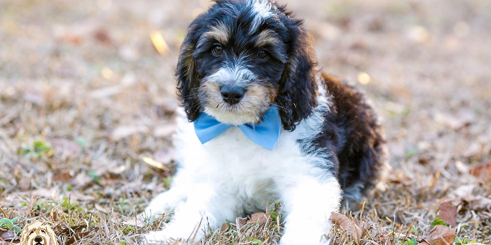 Prada's Charleston Puppy Pickup