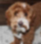 Screen Shot 2019-04-10 at 1.32.57 AM.png