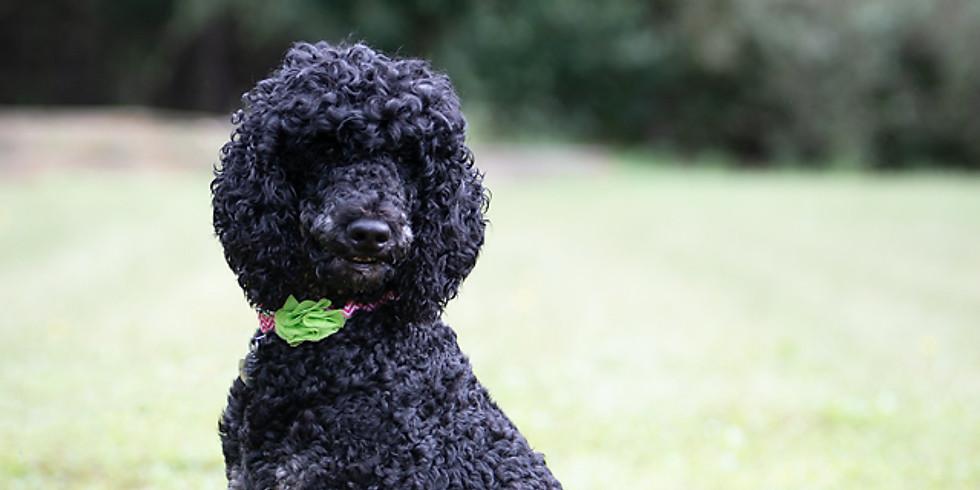 Faith's Charleston Puppy Pickup