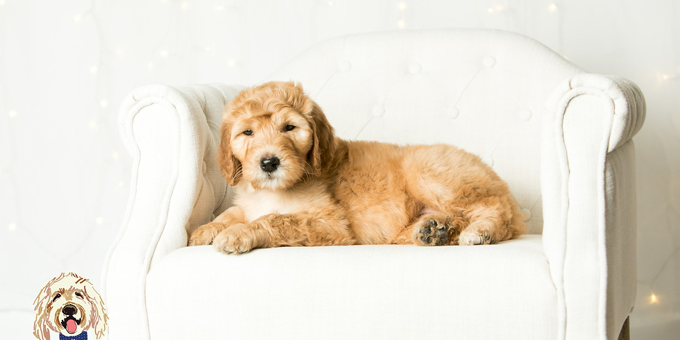 Faith's Charlotte Puppy Pickup