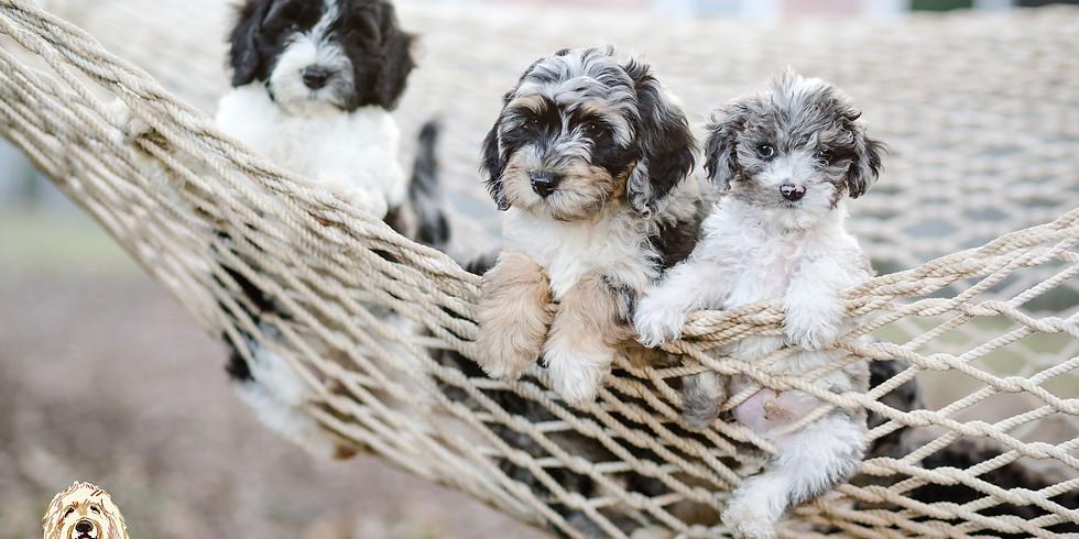 DeLa's Charleston Puppy Pickup