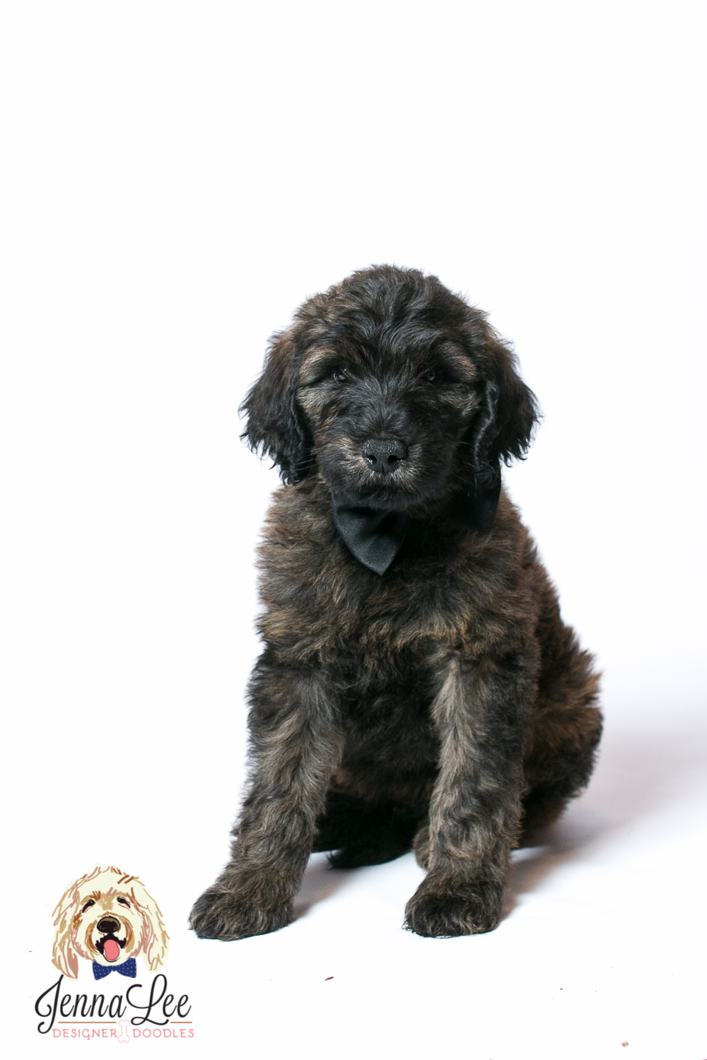 Frequently Asked Goldendoodle Bernedoodle Questions For Breeders