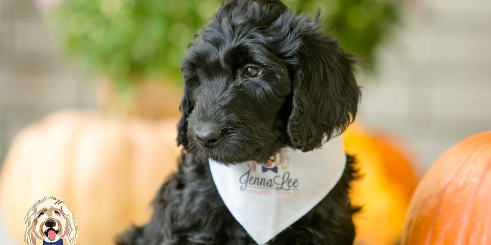 Pettibone's Charlotte Puppy Pickup