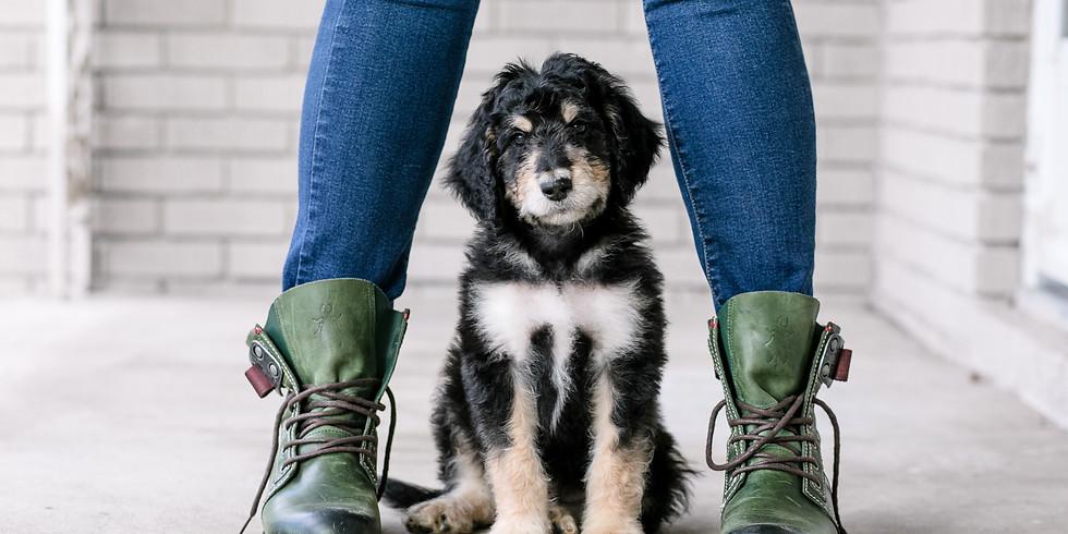 Kensie's Charleston Puppy Pickup
