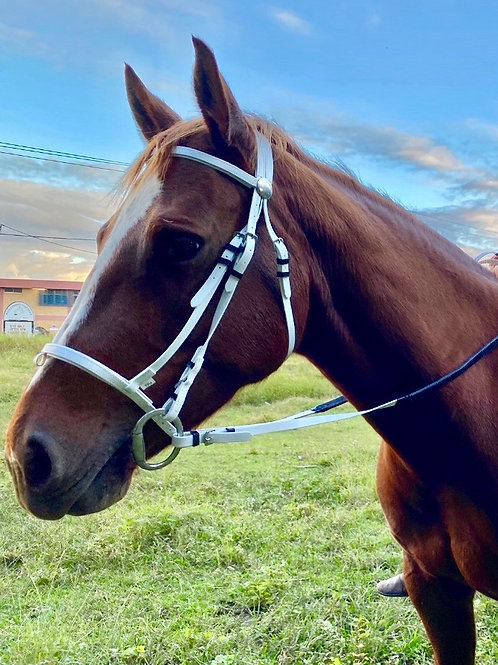 Bridles-Synthetic