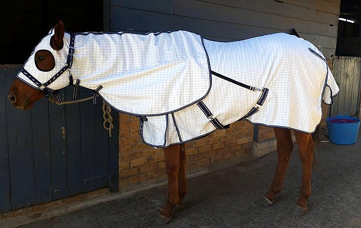 white:rug :horse:crop.png