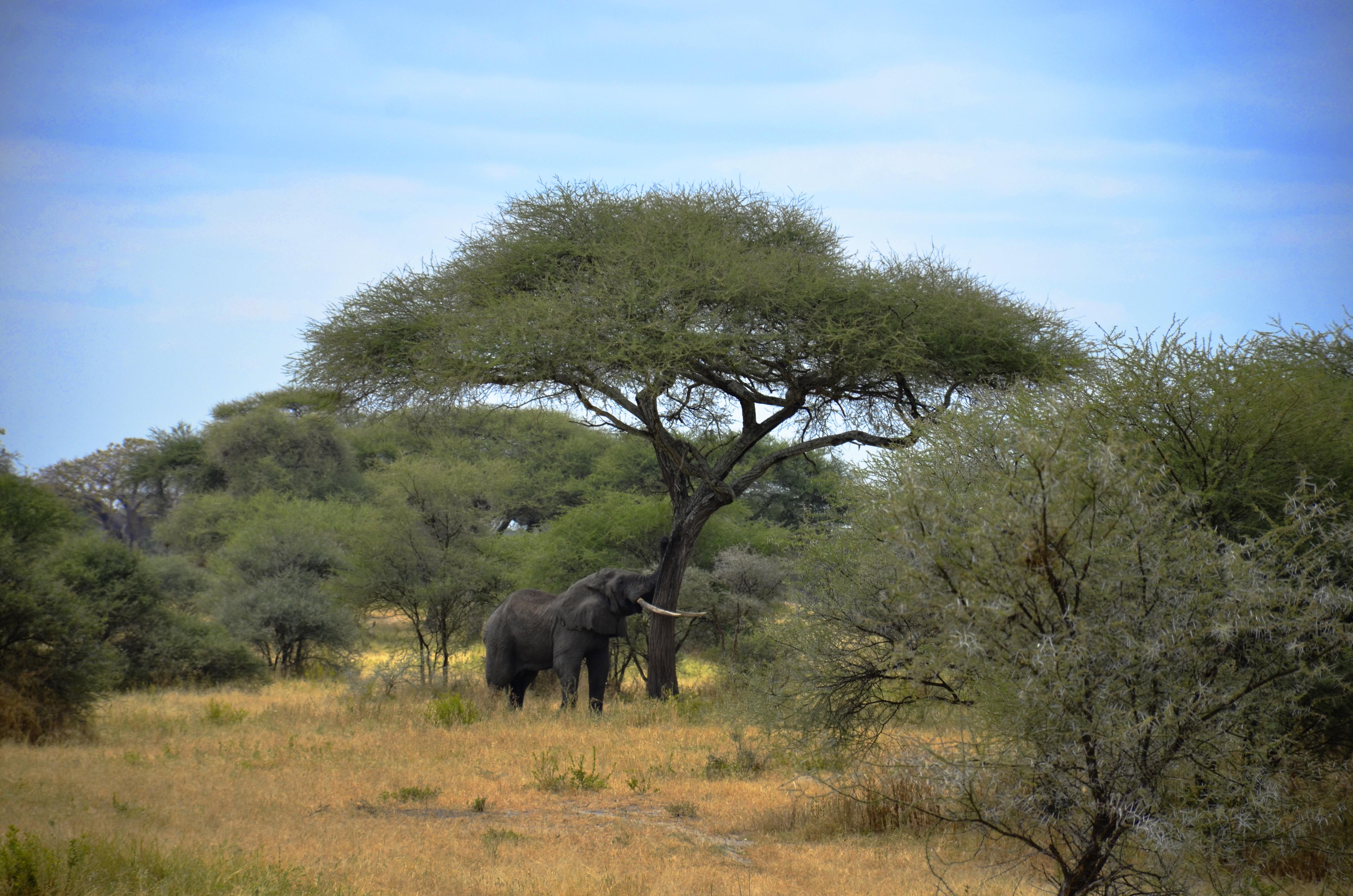 Ngorongoro【Tanzania】
