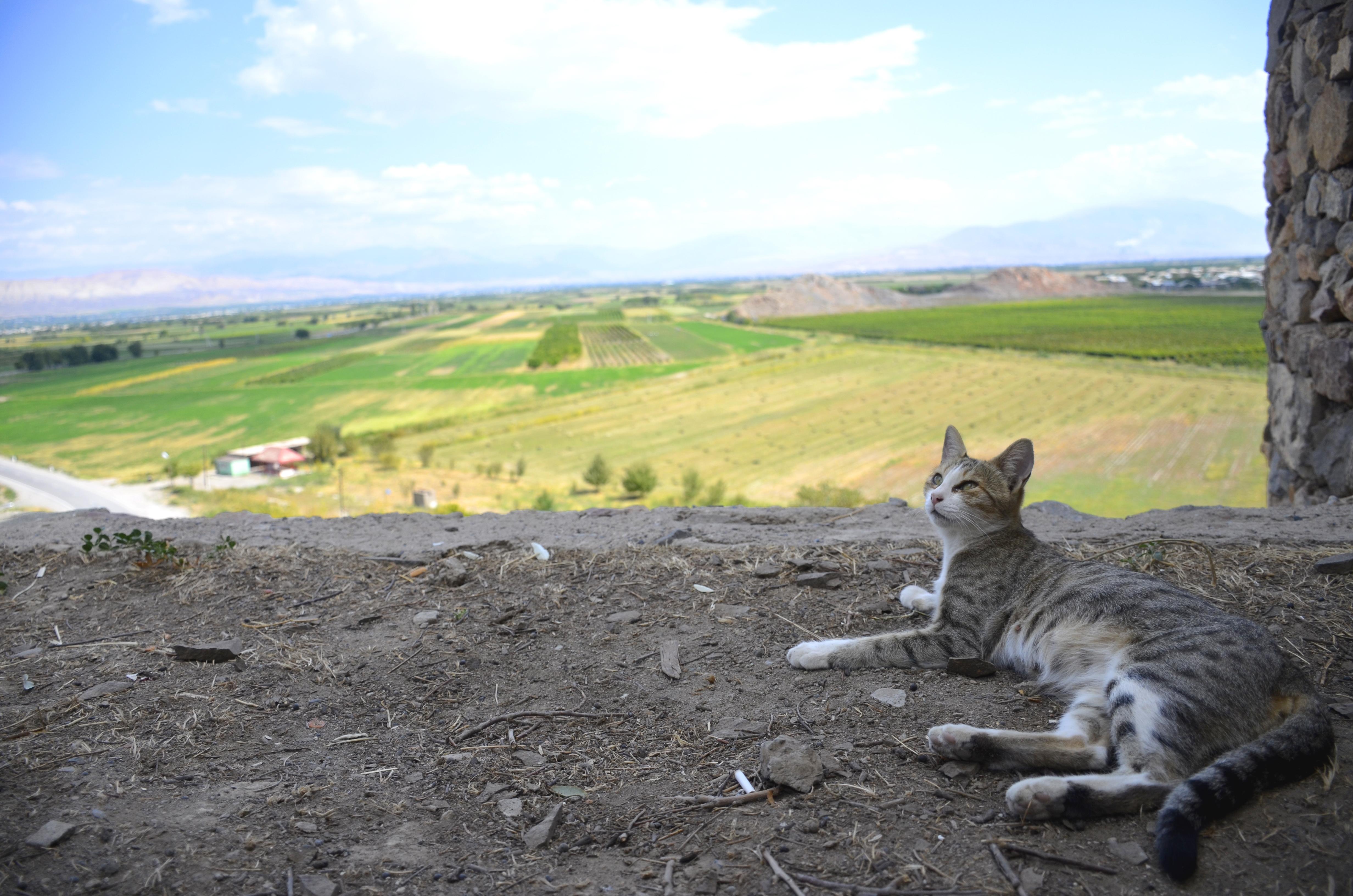 【Armenia】