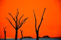 Deadvlei【Namibia】