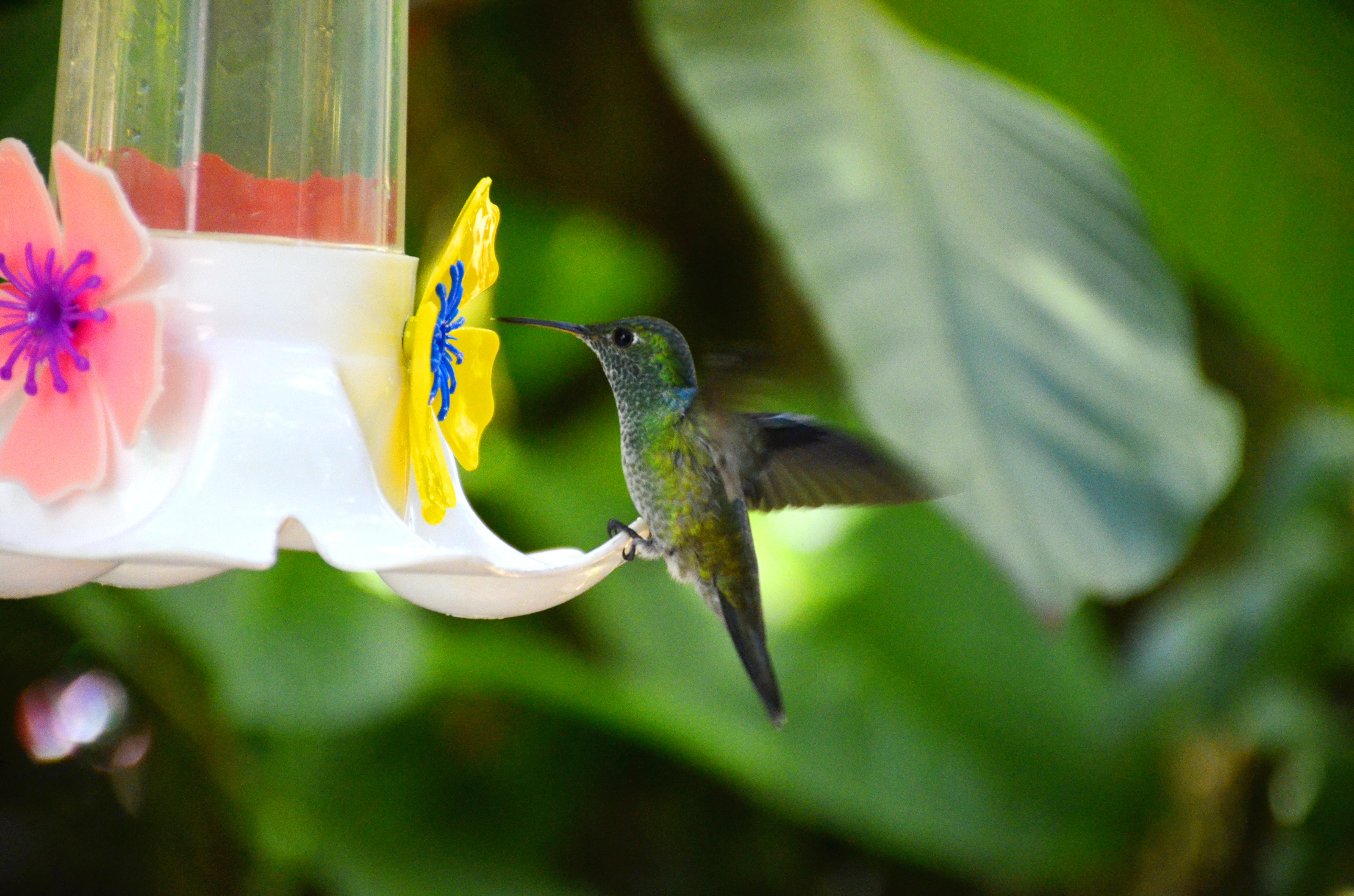 Iguaz【Argentine】