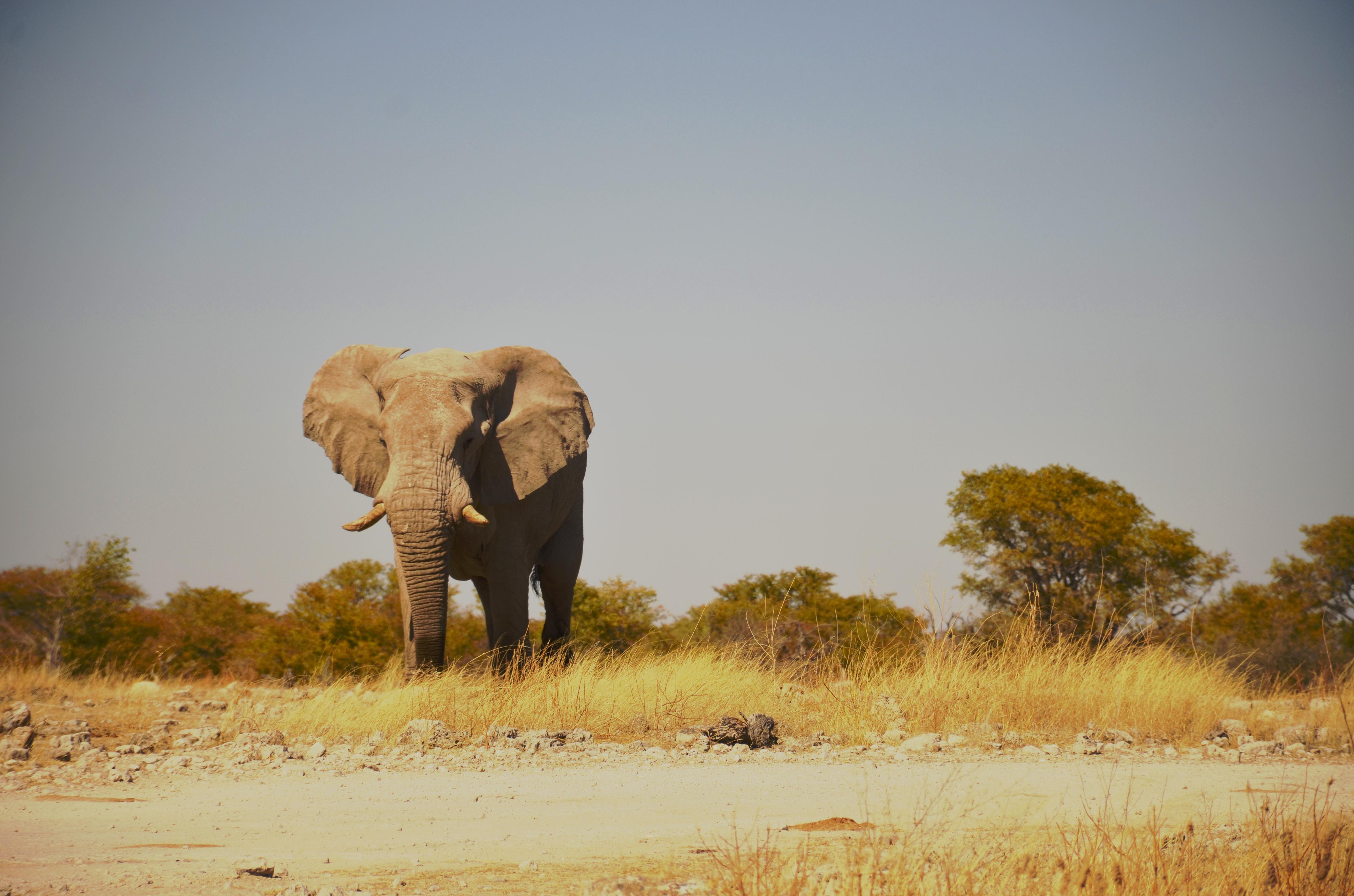 Etosha National Park【Namibia】