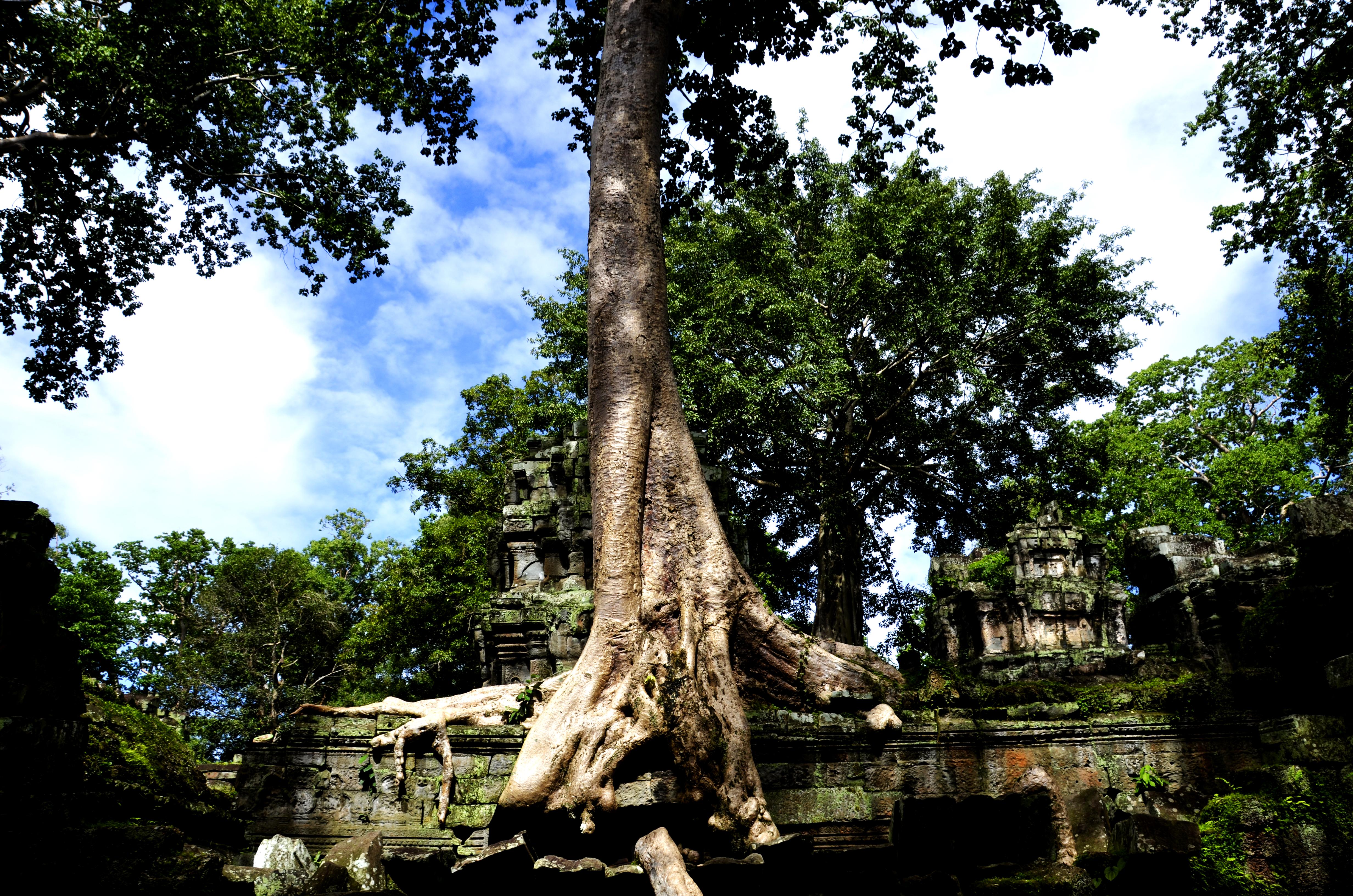 Ta Prohm【Cambodia】