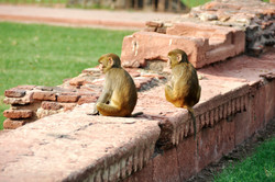 Agra【India】