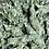 Thumbnail: PINEAPPLE CHUNK