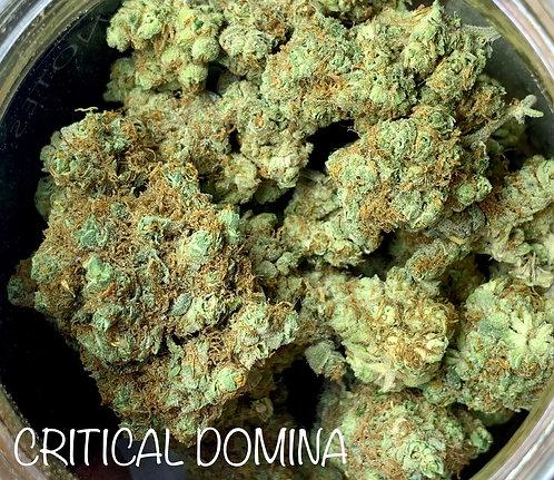 CRITICAL DOMINA