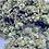 Thumbnail: BLUE CHEESE 2.0