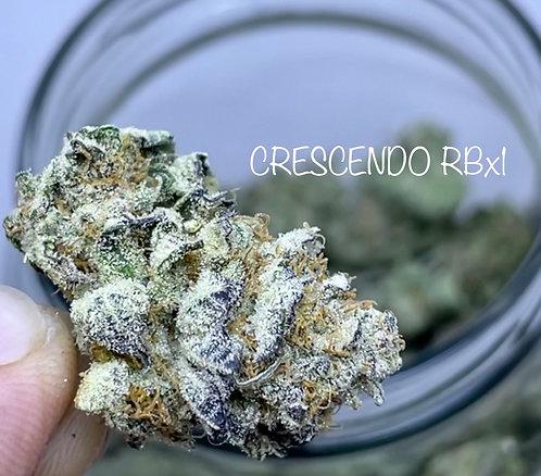 CRESCENDO RBx1