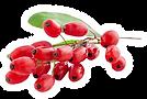 Goji-Berries-benefits-for-skin-hair-and-
