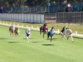 Richmond becomes Australia's deadliest greyhound track – but racing CEO says numbers misleading