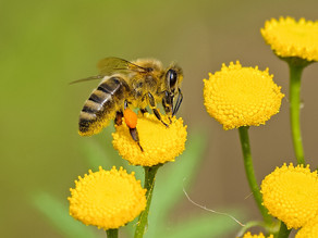 Get buzzing – send in a Pollinator Pledge to support our pollinators