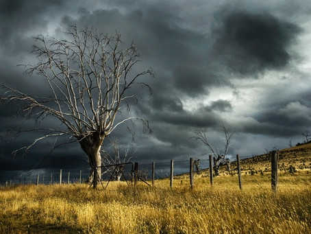Weather warning - strong, gusty winds likely this afternoon and evening across the Hawkesbury